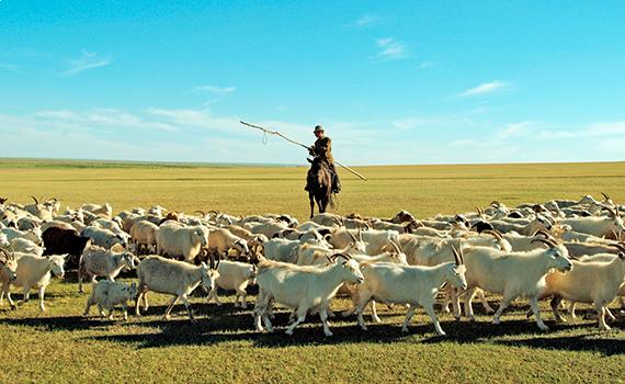 羊飼いの示すまま動く羊と、マスコミ・扇動者の言うままに考える我々の違いはどこにある?(photo by baoyi/fotolia)