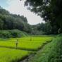 里山公園の谷戸田